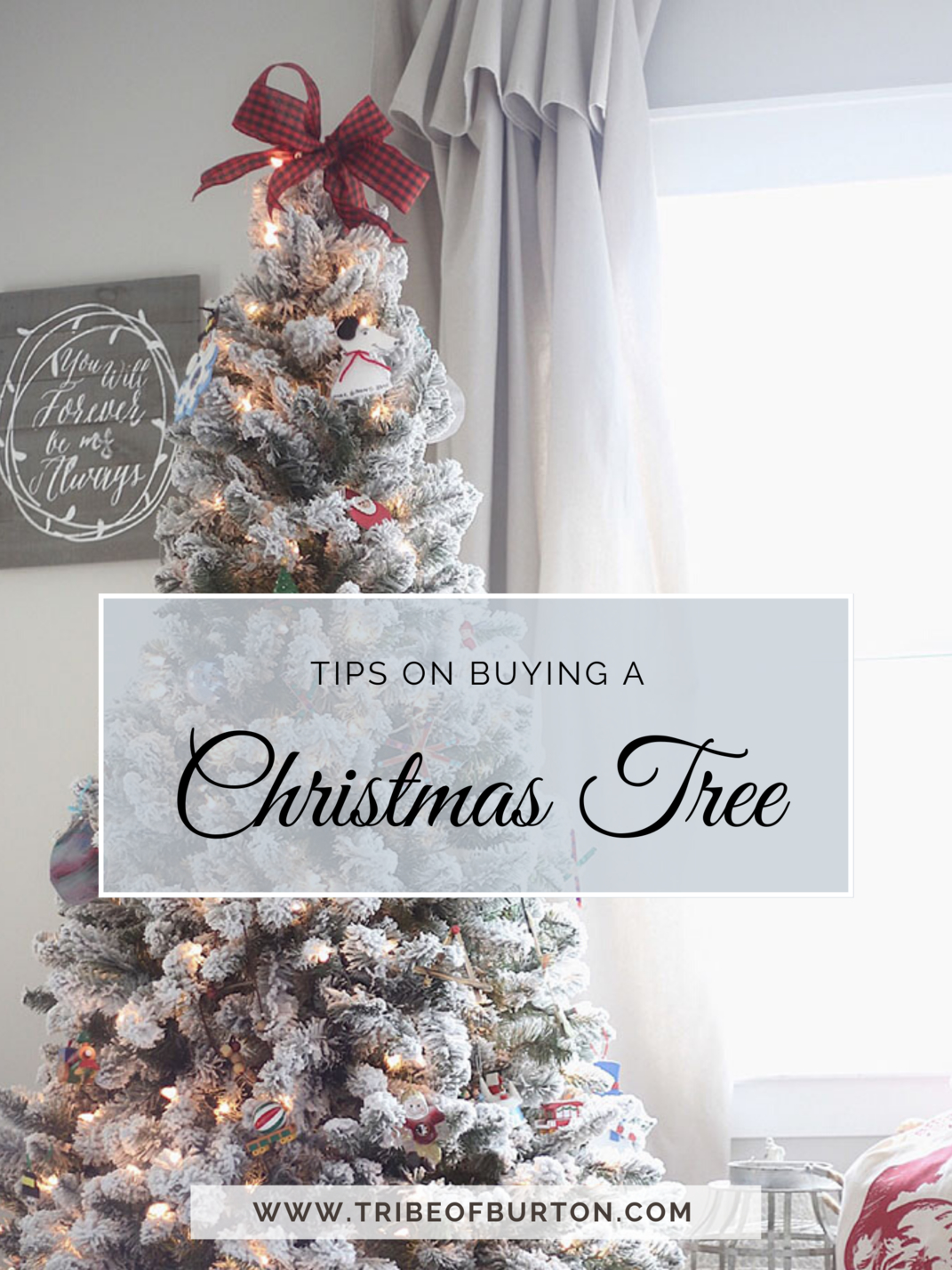 Tips on Buying A Christmas Tree